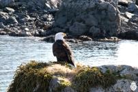 pondering eagle
