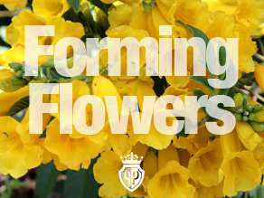 forming flowers cover images