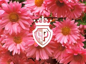 flower girls cover images