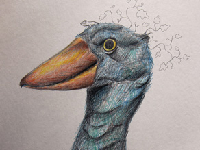 shoebill cover images