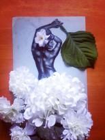 Jazz flowers